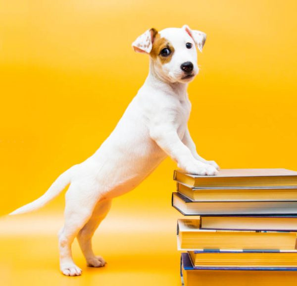 Puppy with books and textbooks